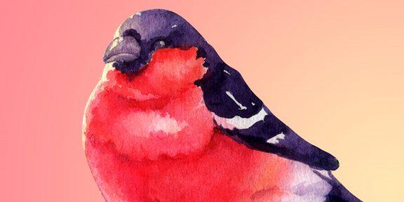 Как нарисовать снегиря фломастерами, карандашами или красками